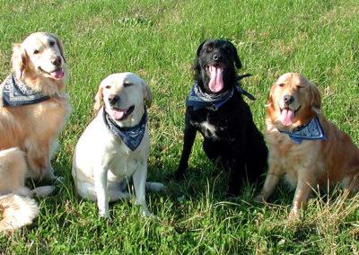 4 cani sociali