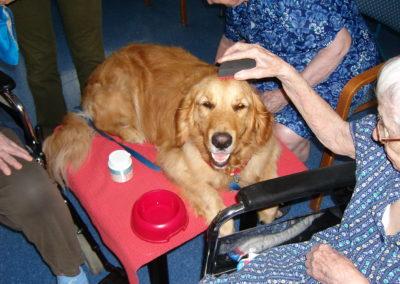 Il cane come collante speciale