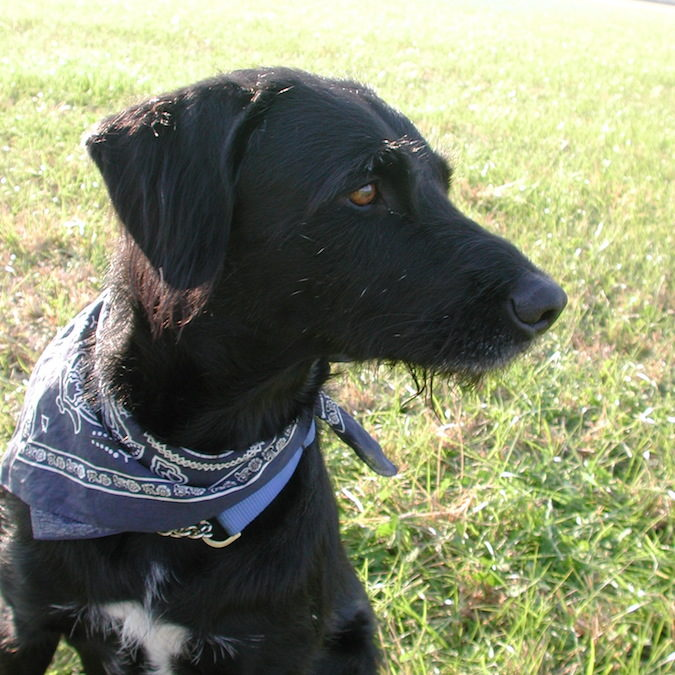 Fagus, unforgettable dog
