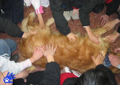 Il cane sociale a scuola